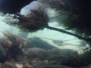 soixante centimètres bien à l'abri. accompagnée d'un poisson plus modeste