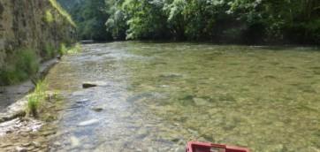 Pêche électrique de Tenay.